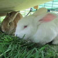 Beautiful Rabbits need A Loving Home Together