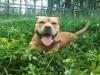 Rescue Dog Annie - Passion4Pawz - 126946-3_b2756164673506023e6483b3850e2f32