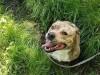 Passion4Pawz Rescue Pup - CHARLIE - 143593-1_520ac2dc94a80488edd26da85ab93c36