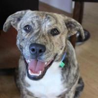 Passion4Pawz Rescue Pup - CHARLIE