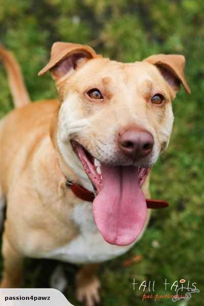 Keeva - Passion4Pawz Rescue Dog