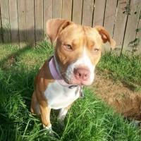 Rescue Pup Irie - Passion4Pawz