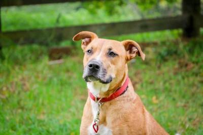 Caramel - Passion4Pawz Rescue Dog