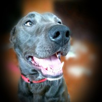 Beautiful, Loving Dog Looking For Forever Home.