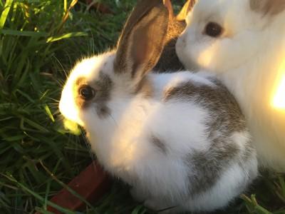 Vienna x baby rabbits