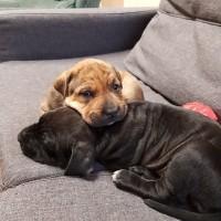 Auckland Puppy Rescue - Draco, Harry, Ron, Cho, Lavendar