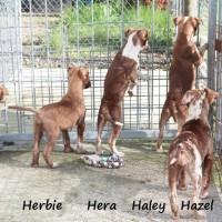 NOW ADOPTED!! SPCA Kawerau happy 'Herbie'