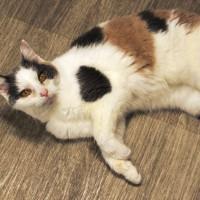 Cats Protection Canterbury - Barbara ADOPTED