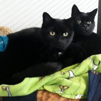 Cats Protection Canterbury - Barney and Gus ADOPTED