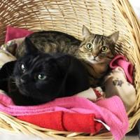 Cats Protection Canterbury - Bayley and Hoki ADOPTED