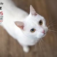 Cats Protection Canterbury - Belle ADOPTED