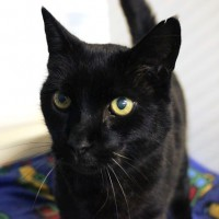 Cats Protection Canterbury - Blake ADOPTED