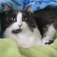 Cats Protection Canterbury - Bonnie ADOPTED