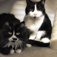 Cats Protection Canterbury - Patches and Bubbles ADOPTED