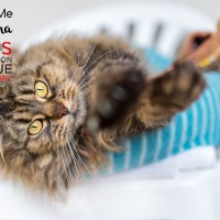 Cats Protection Canterbury - Christina ADOPTED