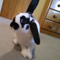 Beautiful young female rabbit needs a new home
