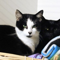 Cats Protection Canterbury - Daisy and Duke ADOPTED
