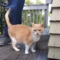 Loving older cat needs new family