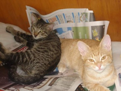 2 beautiful cats need rehoming together due to not liking children and moving