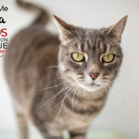 Cats Protection Canterbury - Fiona ADOPTED