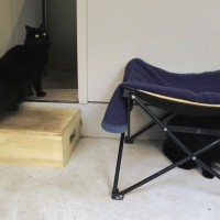 Cats Protection Canterbury - Heidi and Tiger ADOPTED