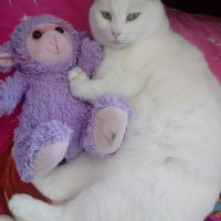 My humans are moving to a new home- no pets allowed - I need a new loving family to meow with :-)