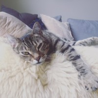 Child-friendly tabby needs a home