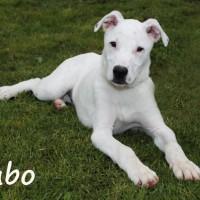 NOW ADOPTED!!SPCA Kawerau eager 'Kubo'