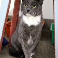 Cats Protection Canterbury - Libby ADOPTED