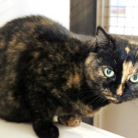 Cats Protection Canterbury - Lilly ADOPTED
