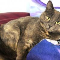 Cats Protection Canterbury - Lola ADOPTED