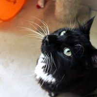 Cats Protection Canterbury - Lucky ADOPTED