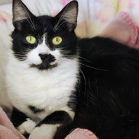 Cats Protection Canterbury - Magdalene ADOPTED
