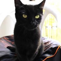 Cats Protection Canterbury - Manu ADOPTED