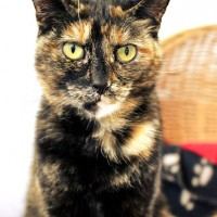 Cats Protection Canterbury - Margarite ADOPTED