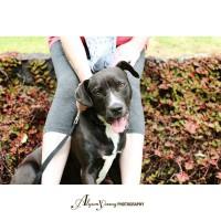 Auckland Puppy Rescue - MIA