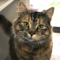 Cats Protection Canterbury - Minnie ADOPTED