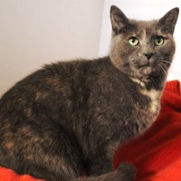 Cats Protection Canterbury - Molly ADOPTED