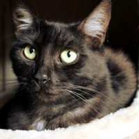 Cats Protection Canterbury - Monty ADOPTED