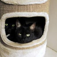 Cats Protection Canterbury - Monty and Hampton HAMPTON ADOPTED