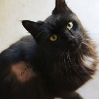 Cats Protection Canterbury - Mykonos ADOPTED
