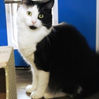 Cats Protection Canterbury - Oscar ADOPTED