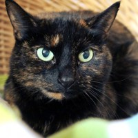 Cats Protection Canterbury - Pepper ADOPTED