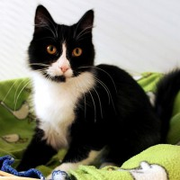 Cats Protection Canterbury - Ruby ADOPTED