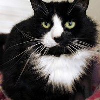 Cats Protection Canterbury - Sadie ADOPTED