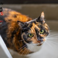 Cats Protection Canterbury - Sally ADOPTED