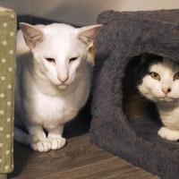 Cats Protection Canterbury - Samson and Riley ADOPTED