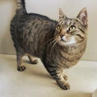 Cats Protection Canterbury - Smooch ADOPTED