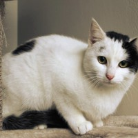 Cats Protection Canterbury - Smudge ADOPTED