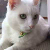 Snowy needs a caring owner